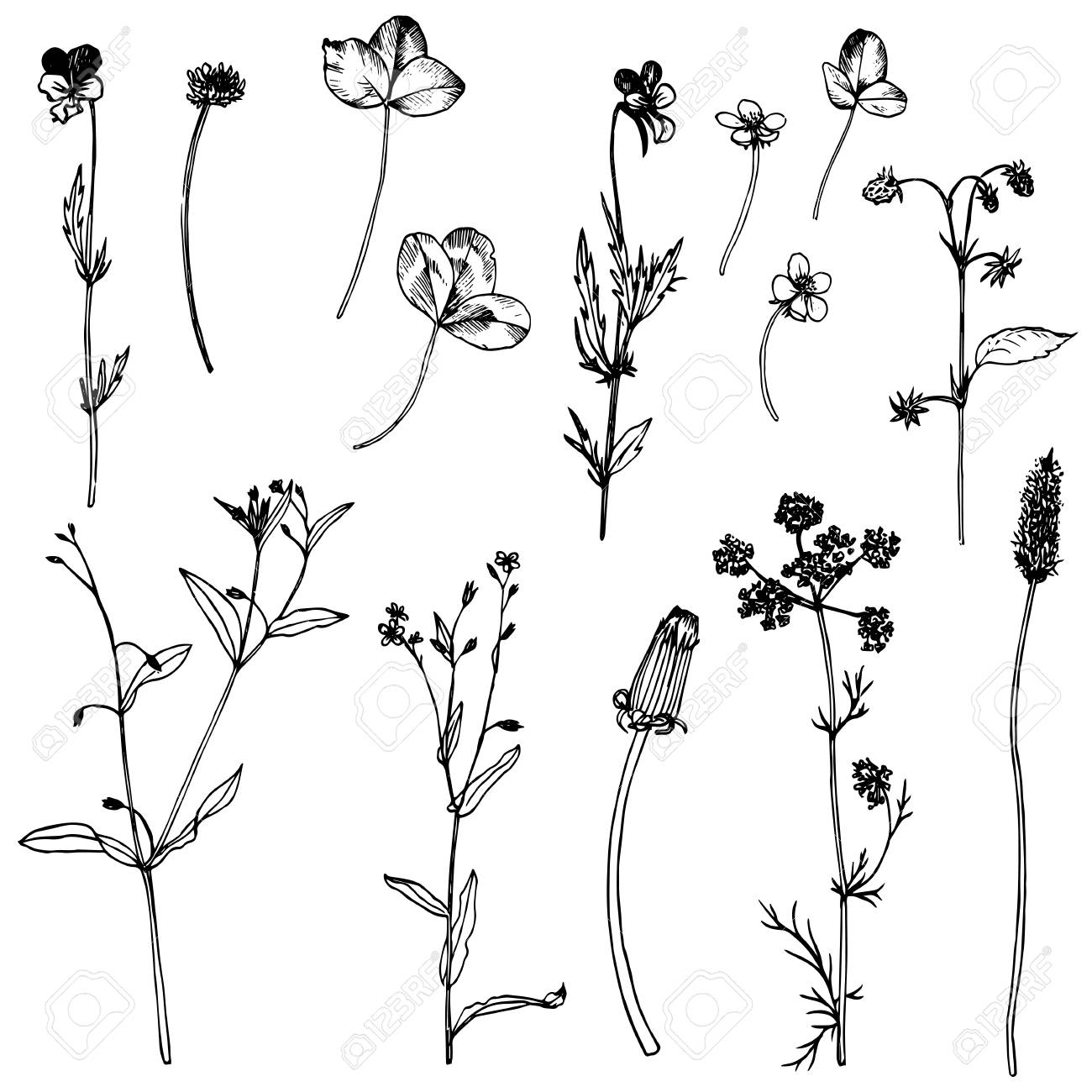 How To Draw A Flower With These Easy Step By Step