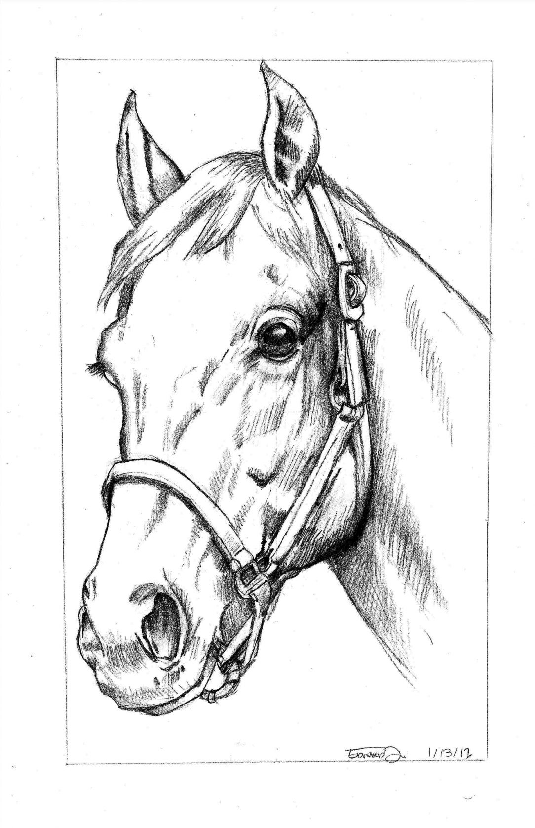 How To Draw A Horse Tutorials That Beginners Should Check Out