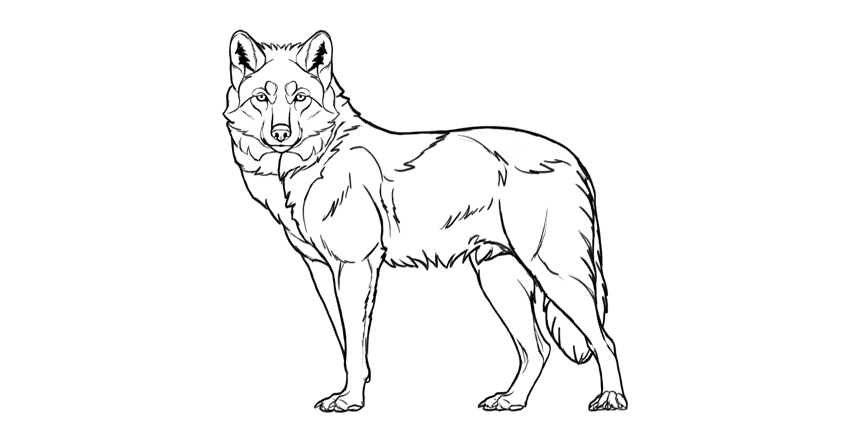 How to draw a wolf (Step by step tutorials for beginners)