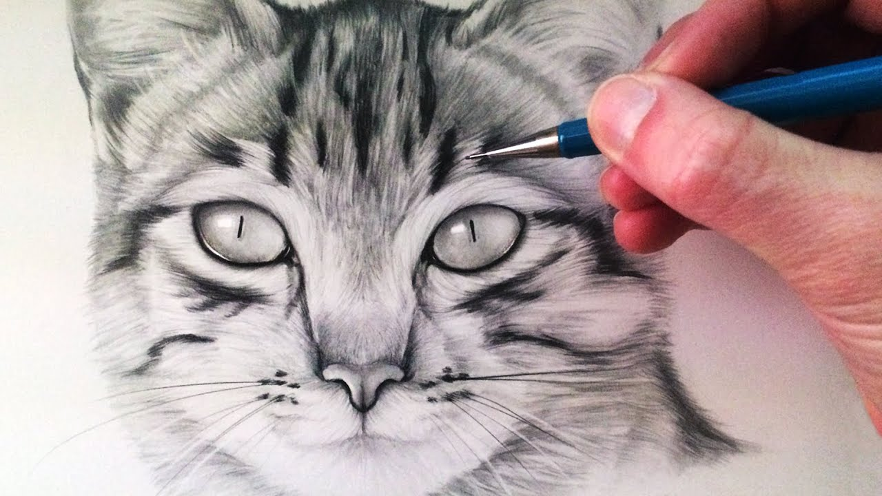 How To Draw A Cat Face And Silhouette With Easy Step By Step Tutorials