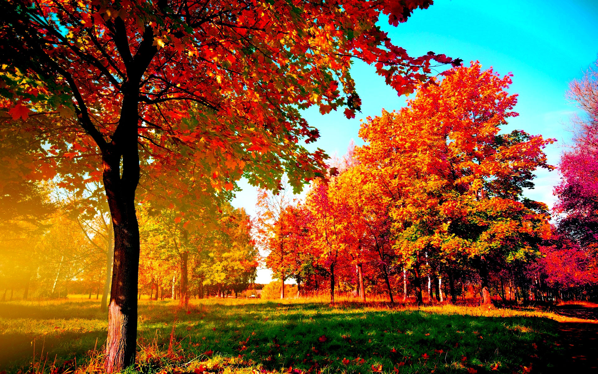 Trees In The Fall Wallpaper Autumn Examples For Your Desktop Background