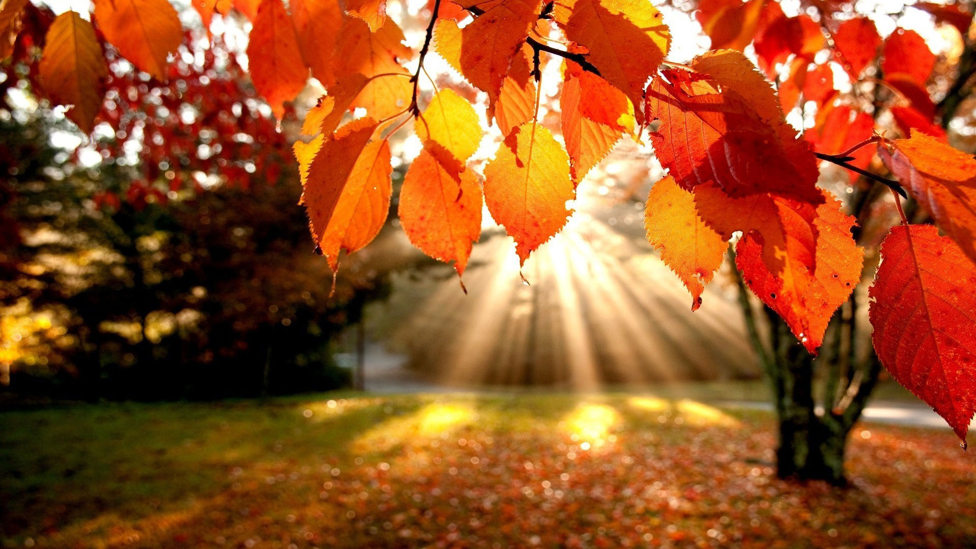im59053839 autumn wallpaper examples for your desktop background