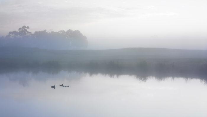 Ducks_On_A_Misty_Pond_36-700x394 4K Wallpapers for Your Desktop Background
