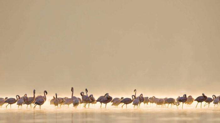 Flamingos_44-700x394 4K Wallpapers for Your Desktop Background