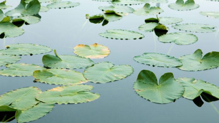 Floating_Leaves_46-700x394 4K Wallpapers for Your Desktop Background