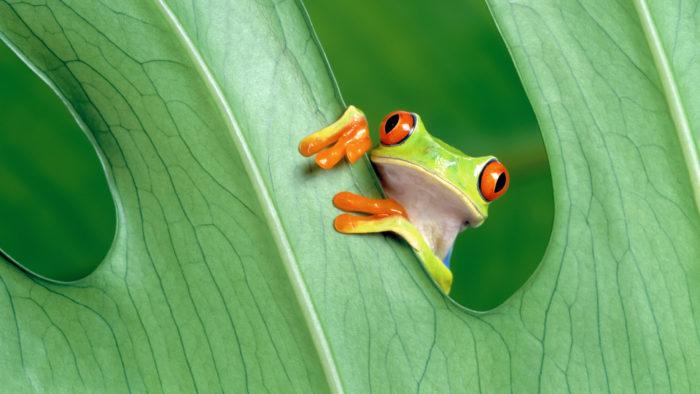 Frog_50-700x394 4K Wallpapers for Your Desktop Background