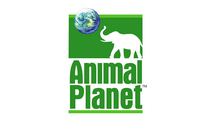 animal-planet-old-logo-700x394 Animal logo design ideas and guidelines to create one