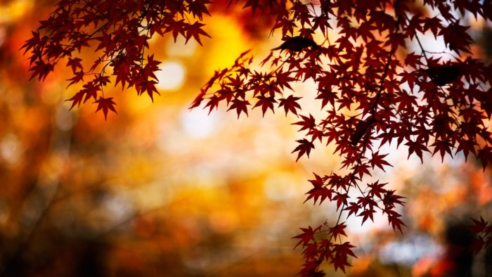 Fall Background Images That You Can Use In Your Designs