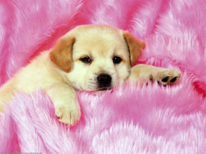 cute-wallpapers-555-700x525 Cute wallpapers to download for your desktop background