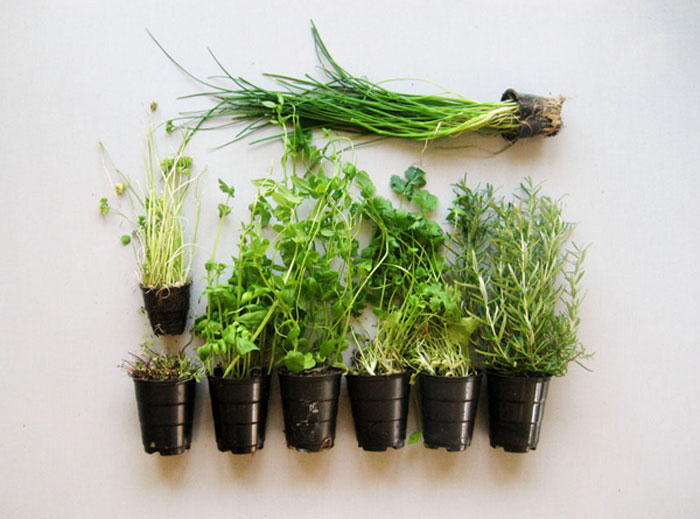 Herbs Knolling photography what it is and great examples to inspire you