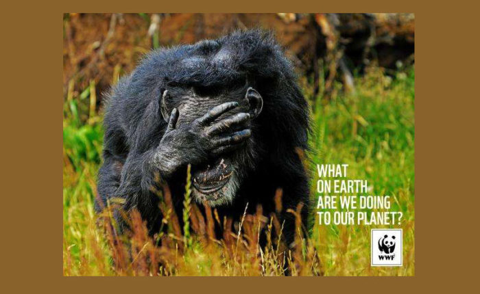 Call-for-Environmental-Change-700x430 Creative WWF ads that will surprise you with their message