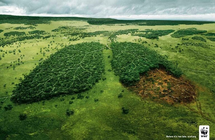 lungs Creative WWF ads that will surprise you with their message