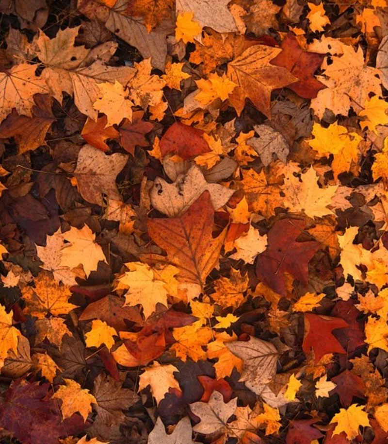 A-Fall-Texture-For-Free Fall background images to use in your projects