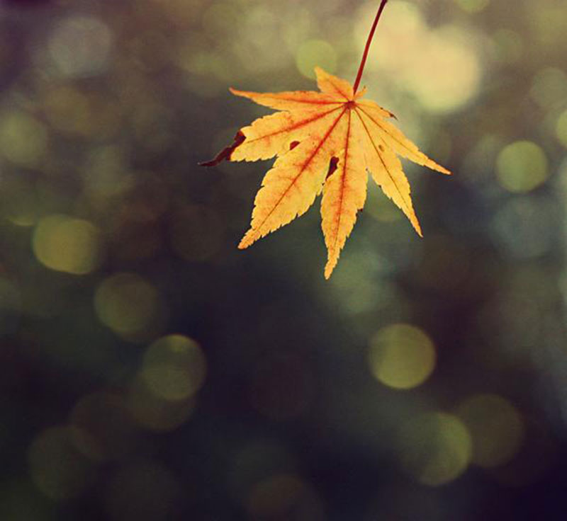 Amazing-Fall-Texture-For-Download Fall background images to use in your projects