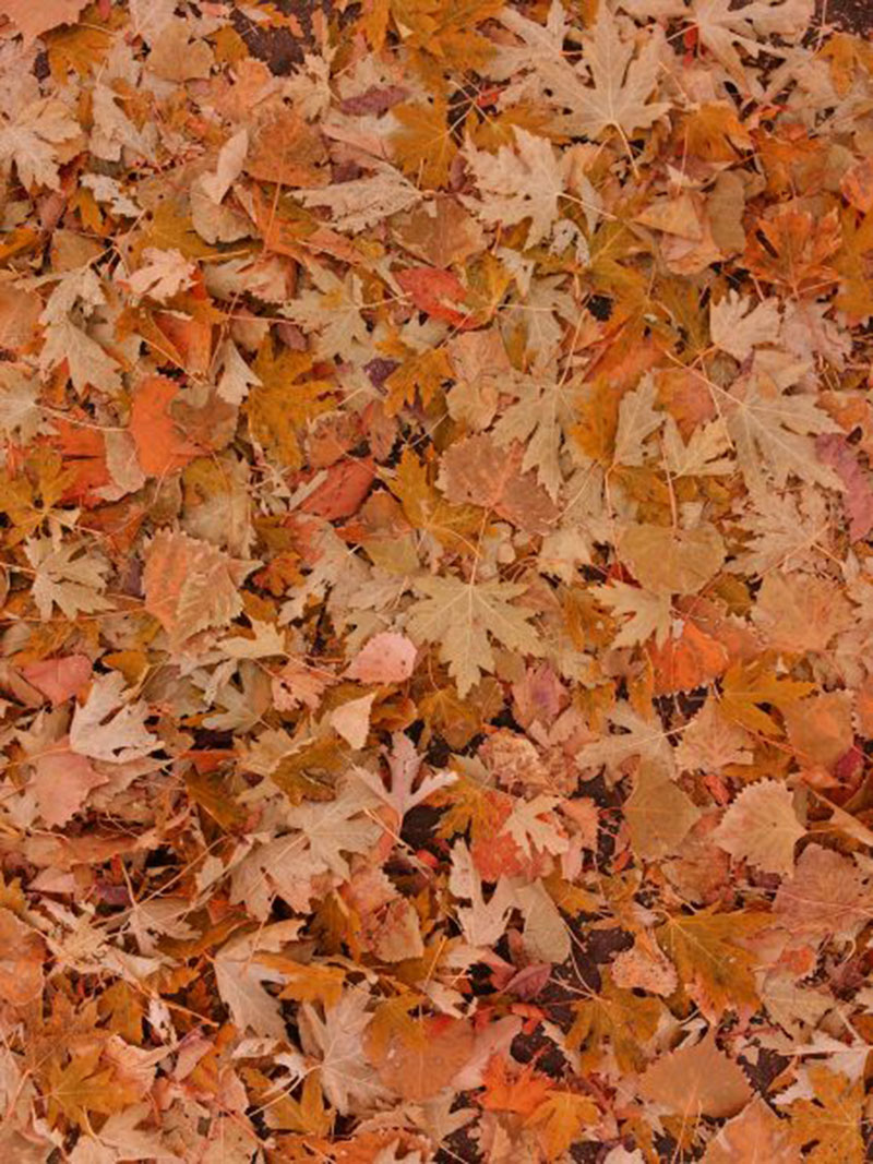 Fall-Leaves-on-the-Ground-The-characteristic-leaves Fall background images to use in your projects