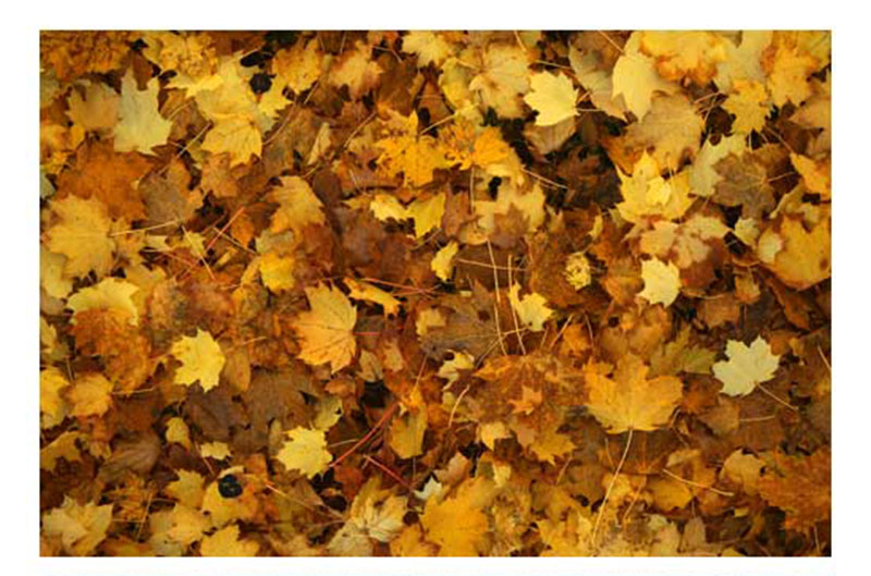 Free-Autumn-Leaves-Textures-Backgrounds-A-great-autumn-set Fall background images to use in your projects