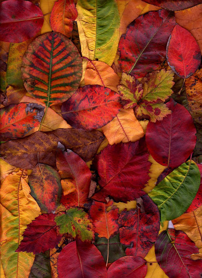 Free-Autumn-Texture-For-Download Fall background images to use in your projects