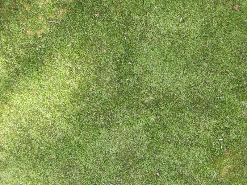 Herbe-texture-Le-meilleur-compagnon Téléchargez ces magnifiques textures de fond dès maintenant