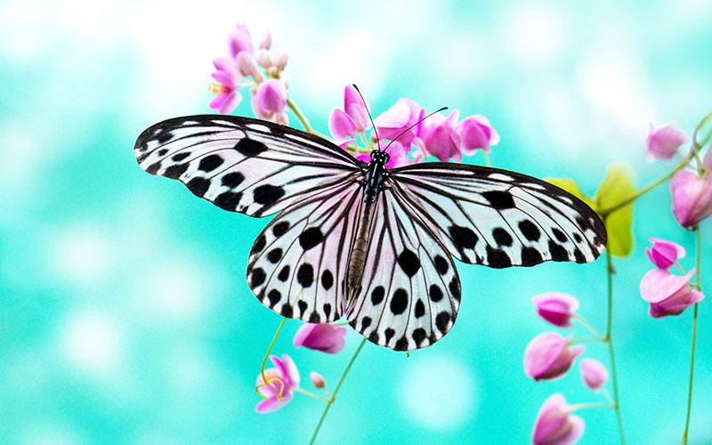 Beautiful Butterfly Wallpaper Examples To Put On Your Desktop Background
