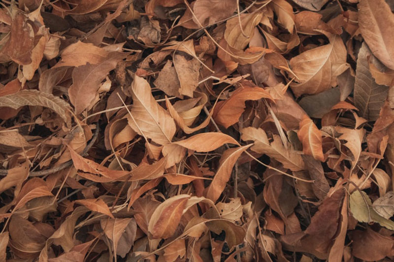 fall14 Fall background images to use in your projects