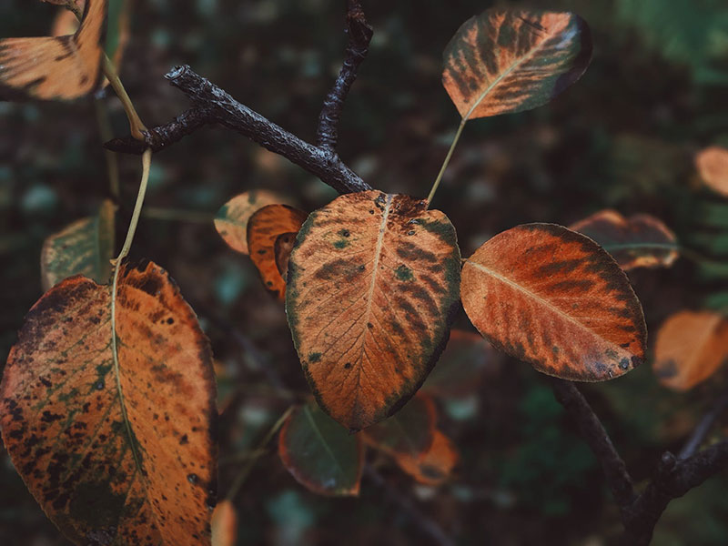 fall20 Fall background images to use in your projects
