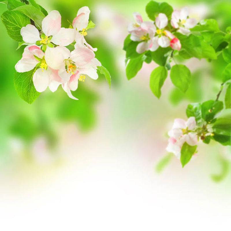 Spring-Background-The-classic-design A great deal of spring background images to download