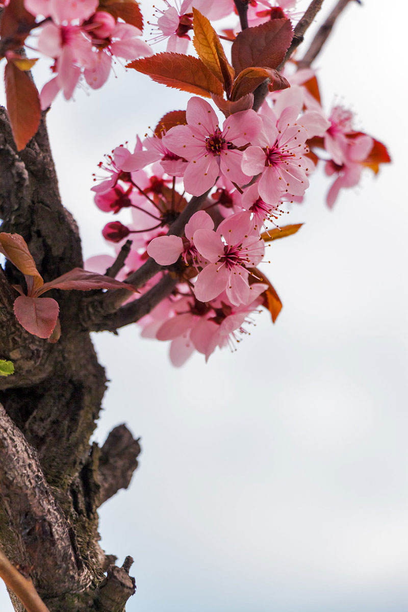 Spring-Flowers-The-spring's-identity-sign A great deal of spring background images to download