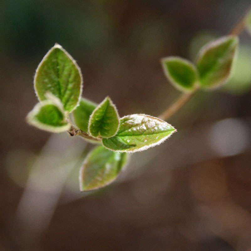 Spring-Leaves-Close-Up-Of-rough-appearance A great deal of spring background images to download