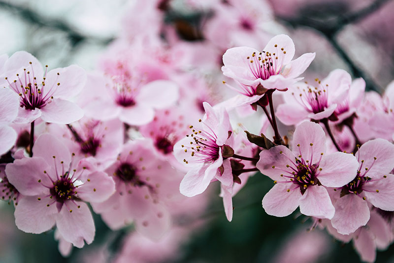 sp1 A great deal of spring background images to download