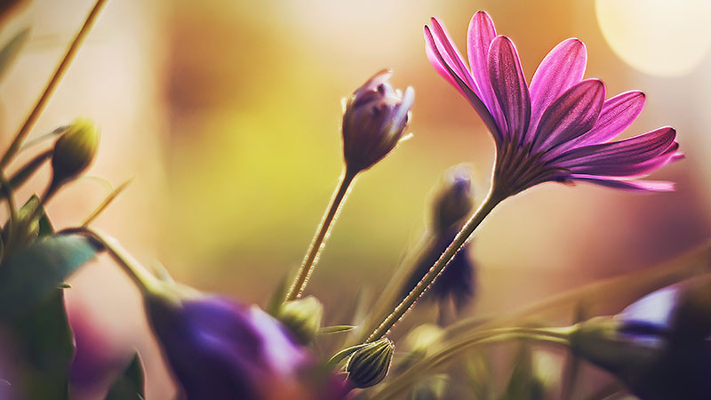 sp10 A great deal of spring background images to download