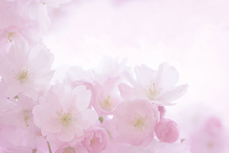 sp18 A great deal of spring background images to download