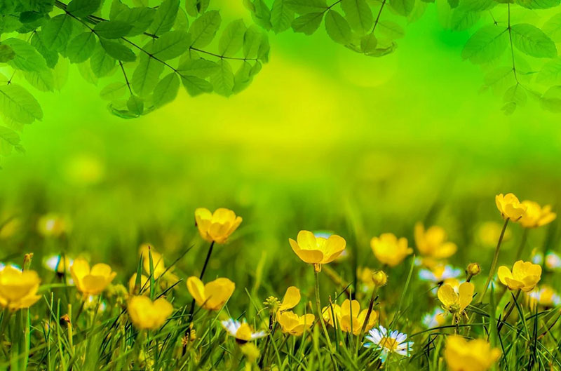 sp21 A great deal of spring background images to download