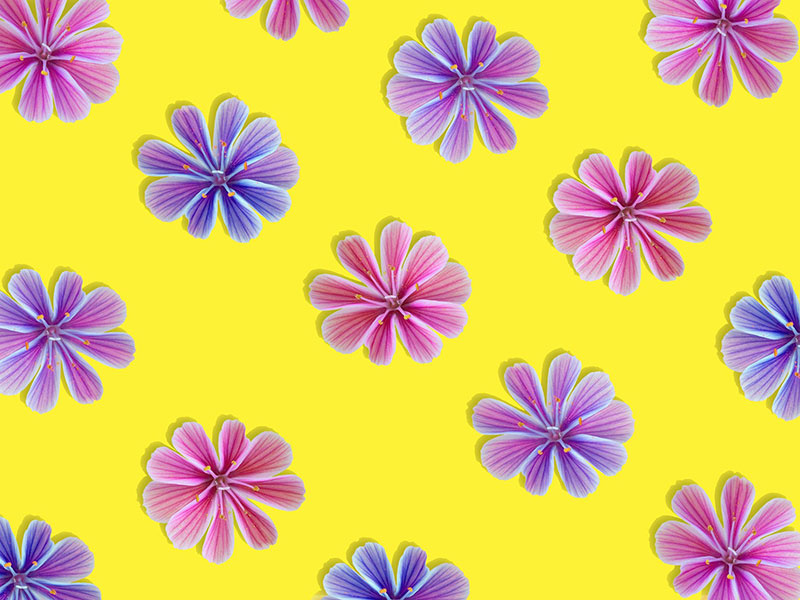 sp3 A great deal of spring background images to download