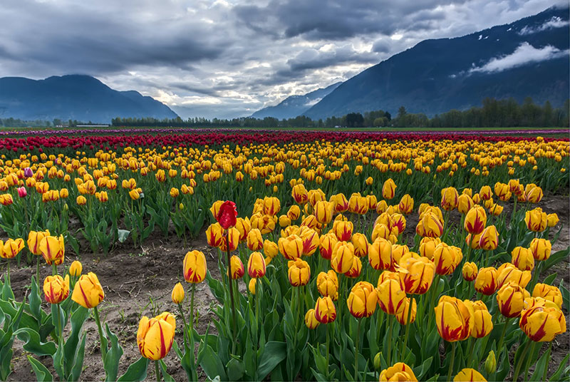 sp4 A great deal of spring background images to download