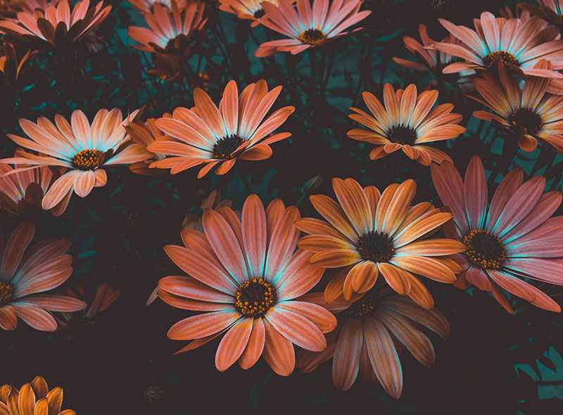 sp7 A great deal of spring background images to download