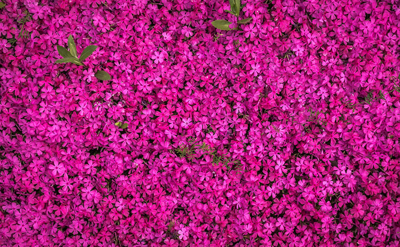 sp8 A great deal of spring background images to download