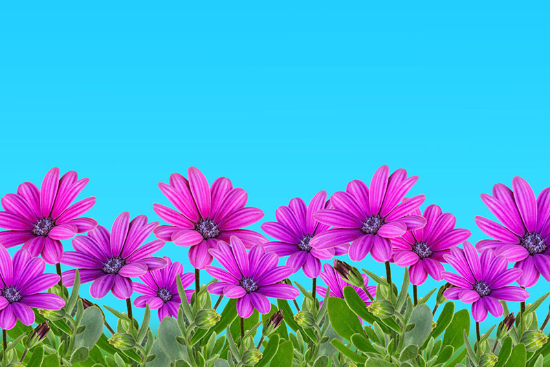 sp9 A great deal of spring background images to download