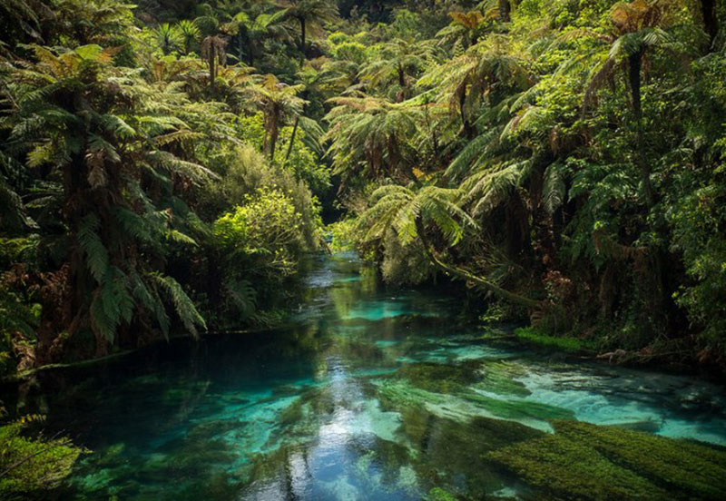 Blue-Springwallpaper New Zealand wallpaper images for your desktop background