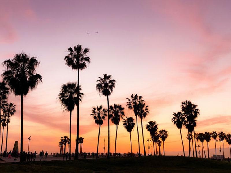 Venice-Beach-Los-Angeles-wallpaper-Tropical-silhouettes Cool Los Angeles wallpaper options to put on your desktop background