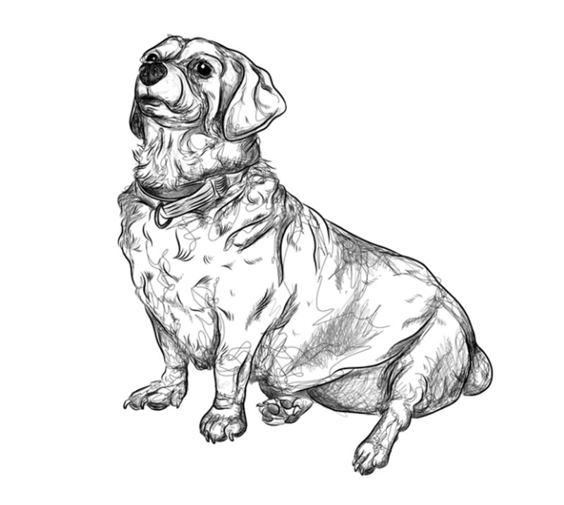 Alfred Awesome dog illustration images to inspire you