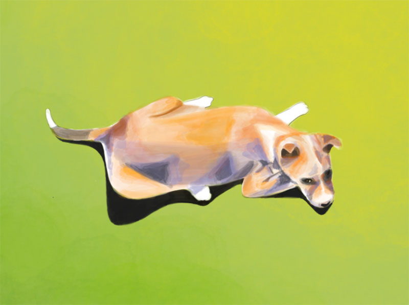 Bouncy Awesome dog illustration images to inspire you
