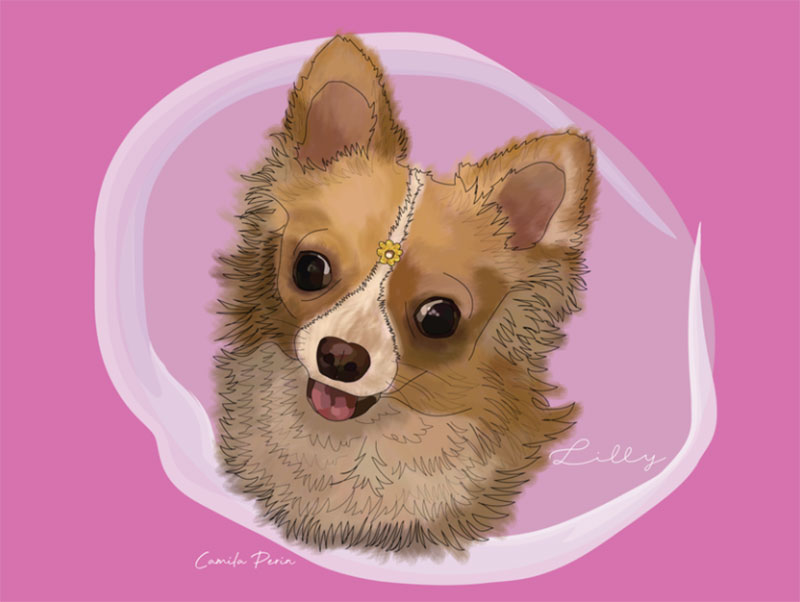 Lilly Awesome dog illustration images to inspire you