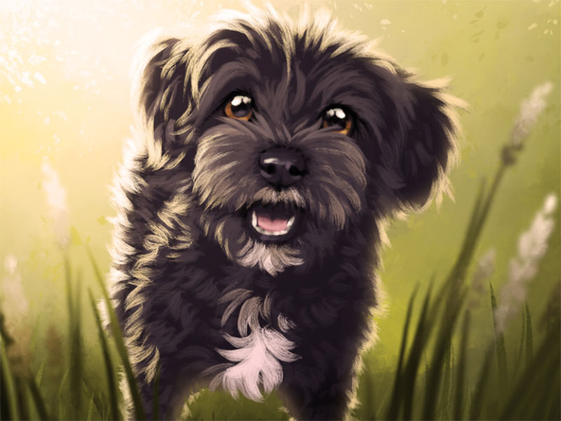 Yorkie-poodle-puppy Awesome dog illustration images to inspire you