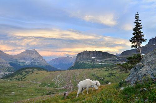 Logan Pass Glacier, National Park, Montana