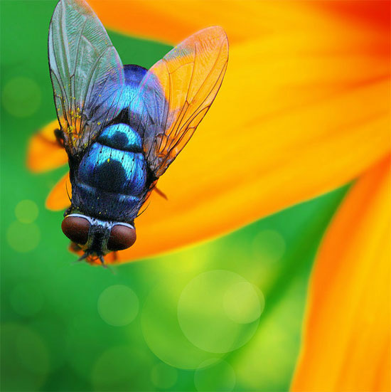 Blue Fly Photography inspiration