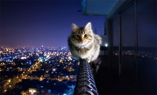 Brave Cat Photography inspiration