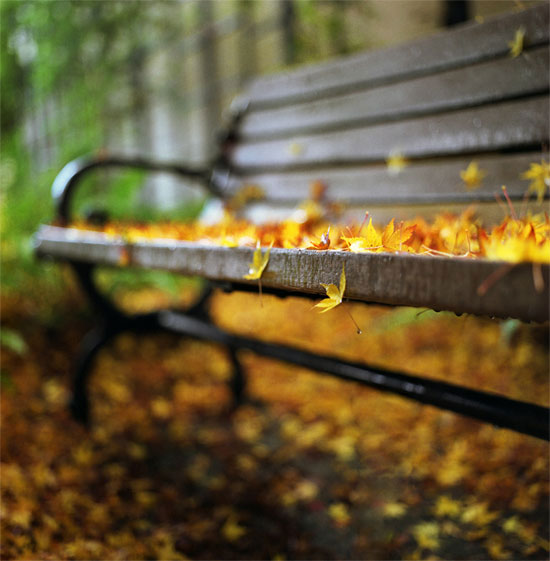 Remnants of Fall Photography inspiration