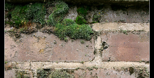 Brick and Moss by Angelrat-Stock