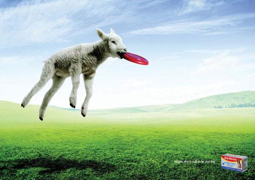 Bob-Martin --- Imagine lo que podría hacer por su perro Advertisement Ideas: 500 Creative And Cool Advertisements