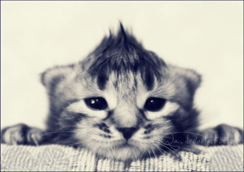 cute kitty Born to be Rocker photography